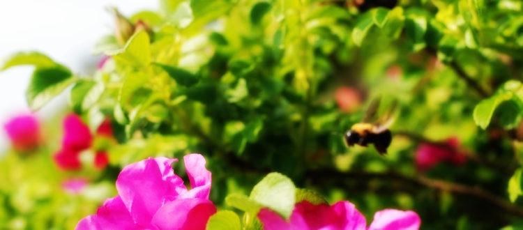 beesflowers