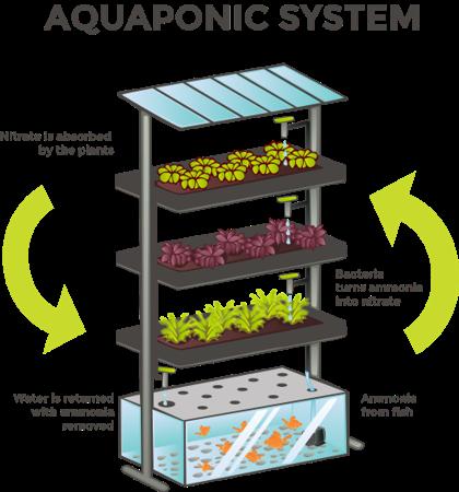 aquaponic